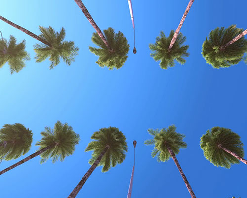 Picture of palm trees and blue sky, looking up
